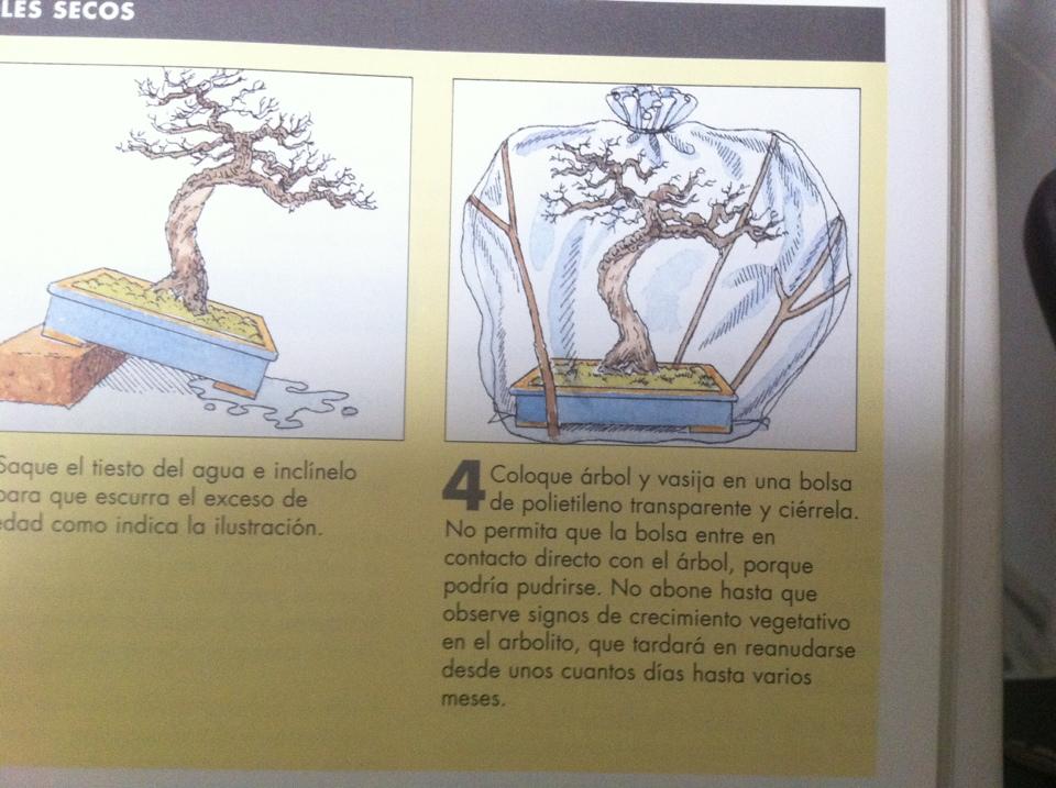 Como recuperar arboles secos. 2m7yzis