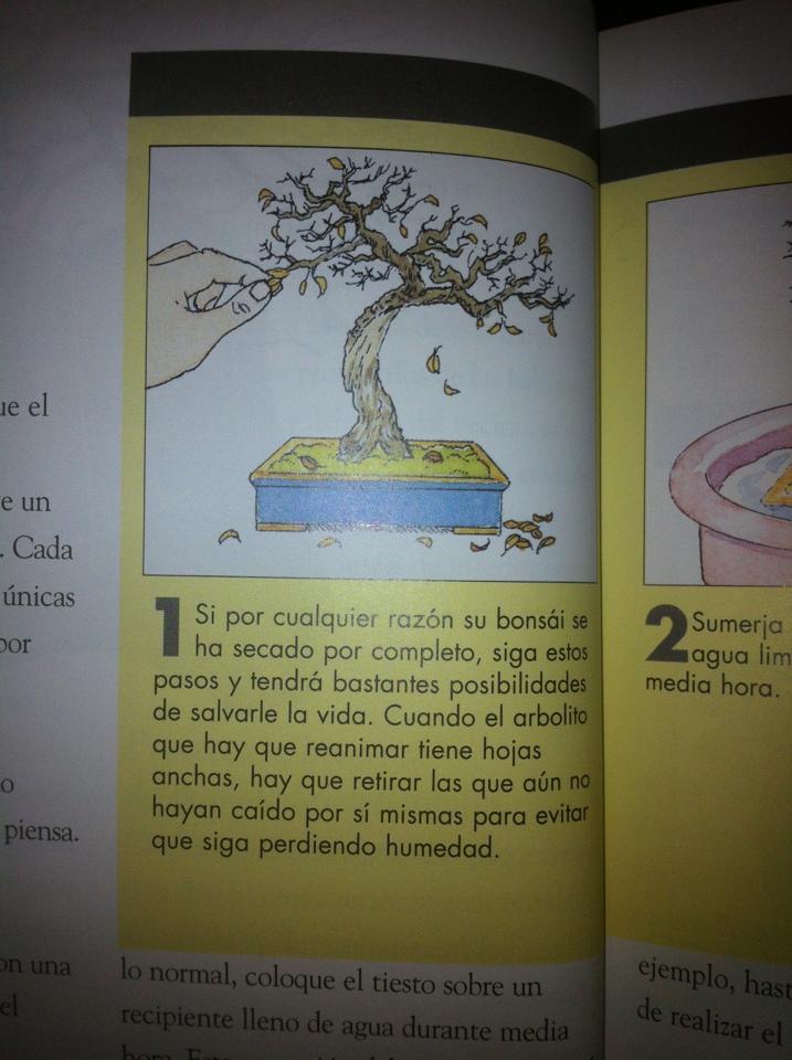 Como recuperar arboles secos. Cnqj7