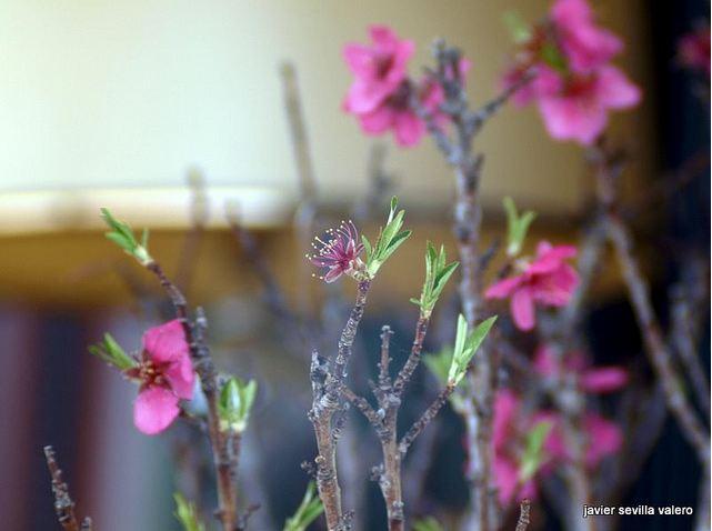 ¿Como hacer las fotos a nuestros bonsais? Imkk77