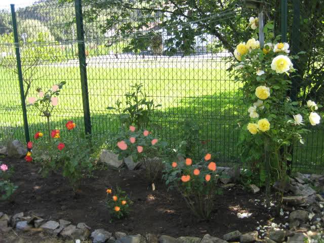 Un sueño.........Mil rosas en mi Jardin - Página 3 Ndoo3l