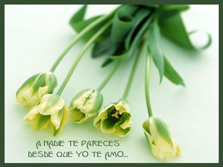¡¡¡¡Un tulipan para ti cada dia!!! Ojj9d