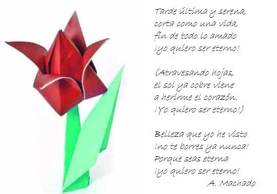 ¡¡¡¡Un tulipan para ti cada dia!!! 1tvpsn