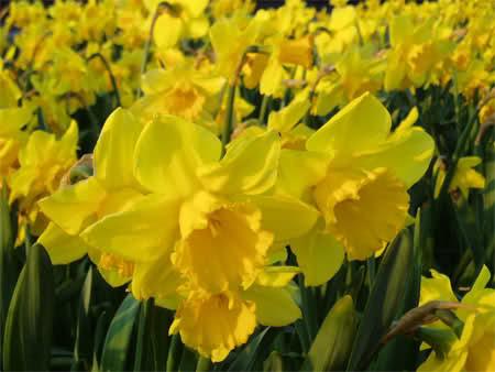 Ý nghĩa ngày sinh trong 12 tháng theo các loài hoa 20afnr9
