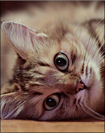 Kittytail