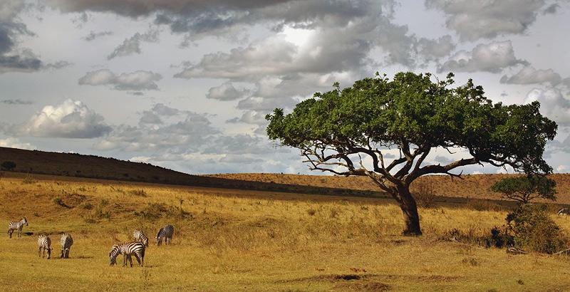 .. un viaje a la sabana africana ... 28bhc3b