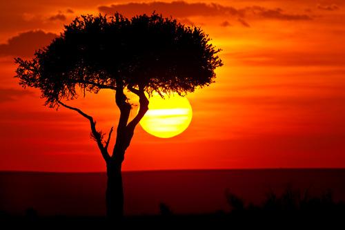 .. un viaje a la sabana africana ... 2v8l4w2