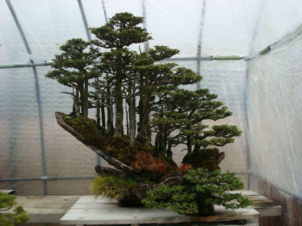 Presentación de los bonsais y la casa de Masahiko Kimura. - Página 2 B5ocg1