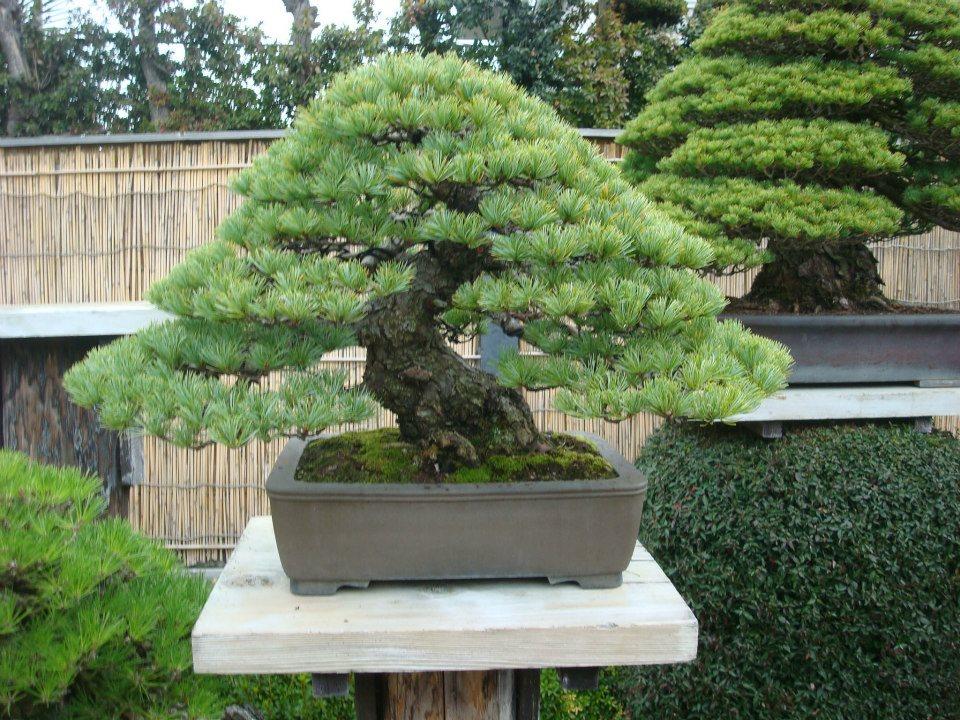 Presentación de los bonsais y la casa de Masahiko Kimura. - Página 2 E15hch