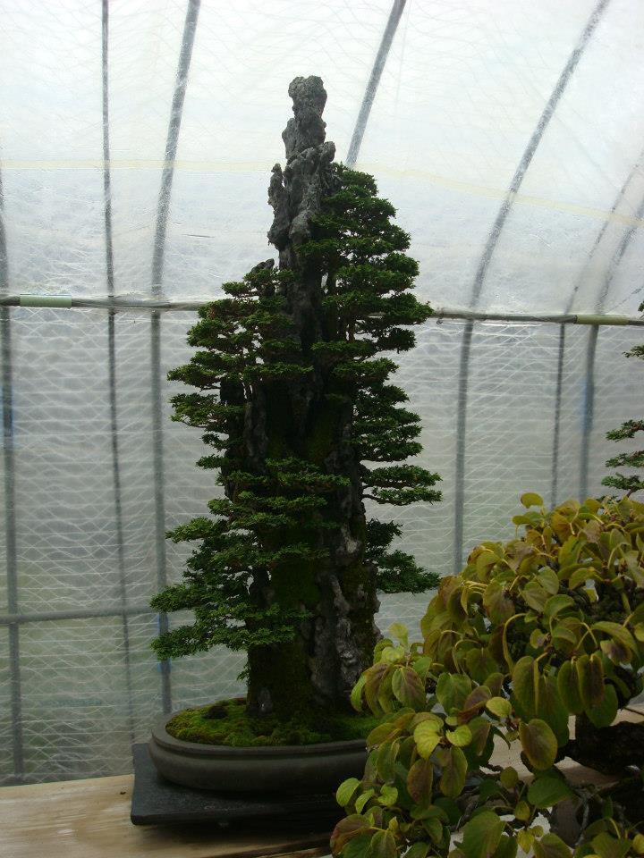 Presentación de los bonsais y la casa de Masahiko Kimura. - Página 2 E7fex0