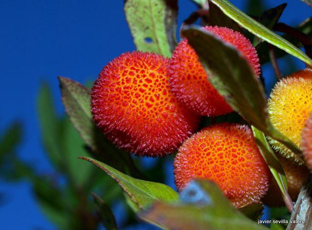 ¿Como hacer las fotos a nuestros bonsais? Ffahyh