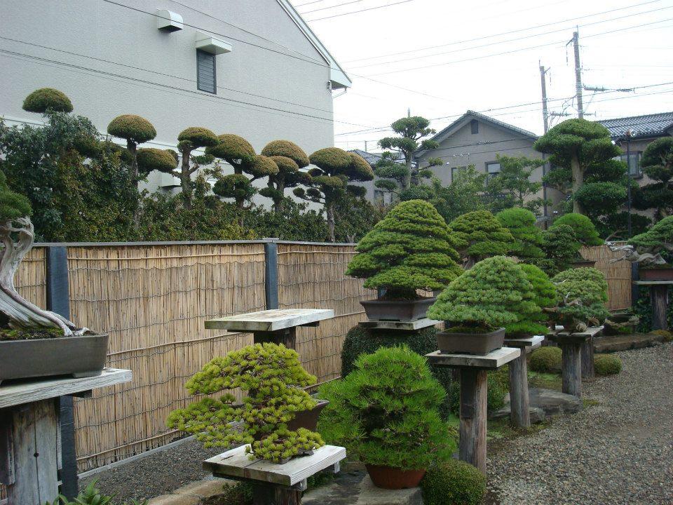Presentación de los bonsais y la casa de Masahiko Kimura. - Página 2 Rmi6oz