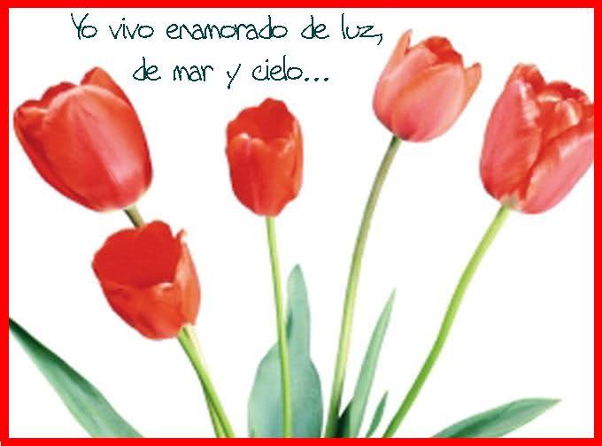 ¡¡¡¡Un tulipan para ti cada dia!!! 1z6483p