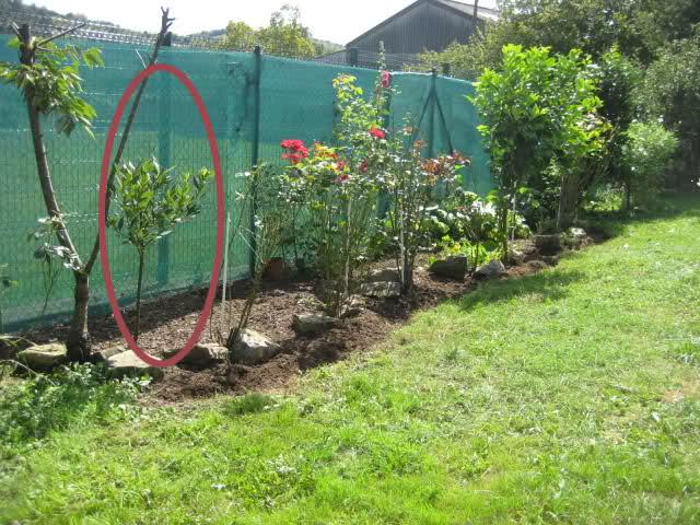 Un sueño.........Mil rosas en mi Jardin - Página 9 16064us