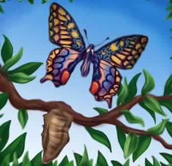 CADENA DE HAIKUS  - Tema las mariposas - 1zyfrba