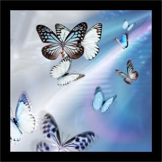 CADENA DE HAIKUS  - Tema las mariposas - 288umnd