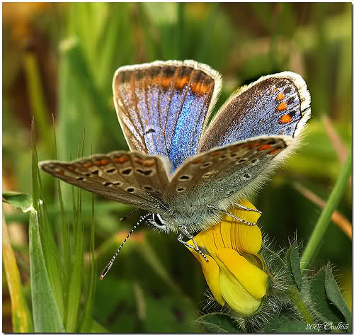 CADENA DE HAIKUS  - Tema las mariposas - 10xhoh0