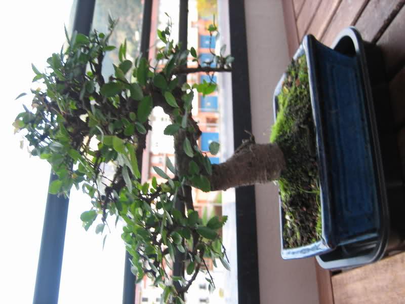 Mi primer bonsai 2dttc1x