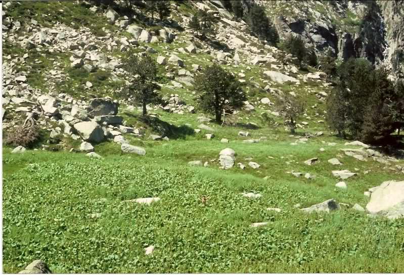 Aquel viaje del año 1.983: Murcia-Pirineos en Vespa Xc0x1d