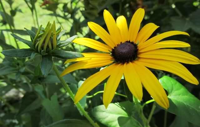 Cveće slike - Page 3 1zamo6
