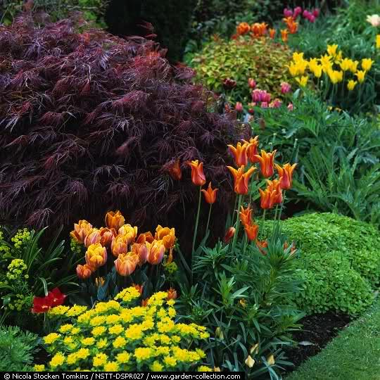 El Arco Iris en el Jardín Wcmicx