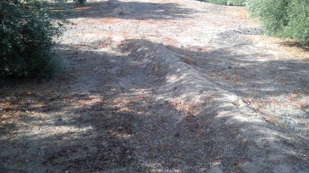 Manejo de suelos y uso de herbicidas 121sehv