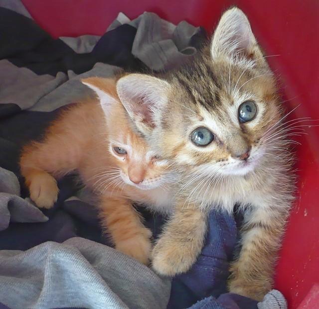 Una de gatos, el foro de nuestras mascotas. - Portal 286x2u0