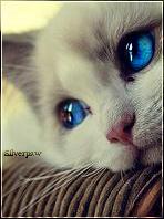 Silverpaw**