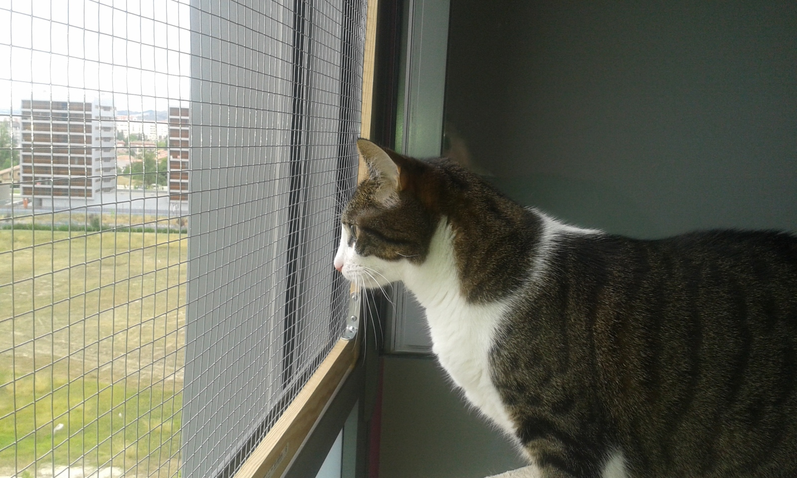 redes - Mosquiteras y redes para las ventanas y cómo proteger a nuestros gatos - Página 10 2dtagsl