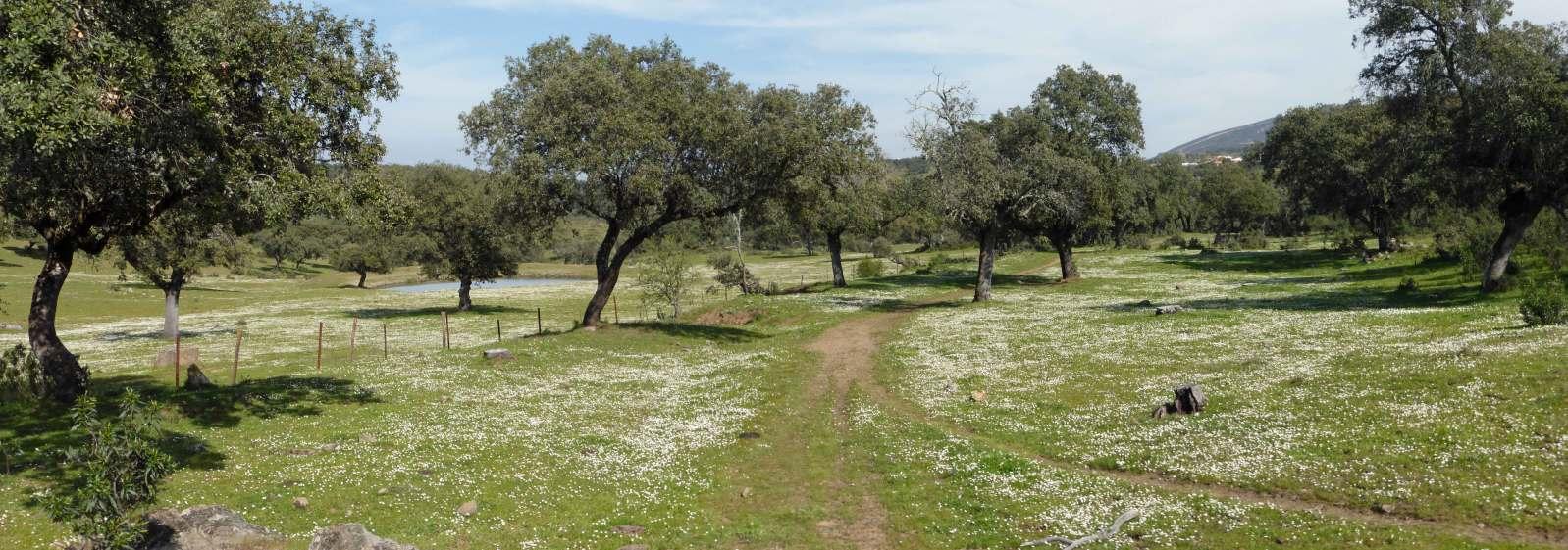 Vía de la Plata-Camino Sanabrés (Sevilla-Santiago). 2lifvus