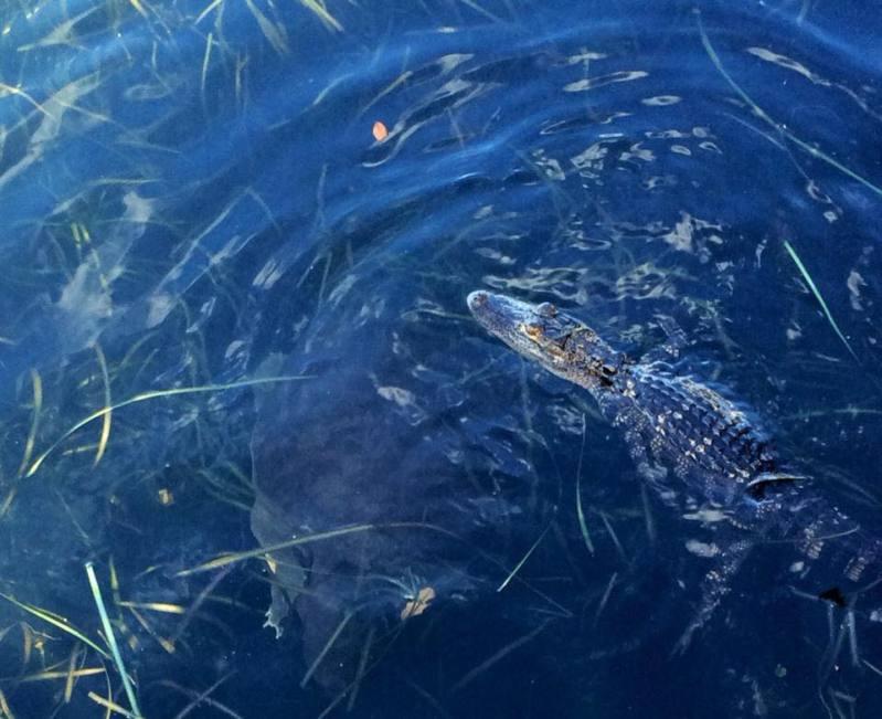 Critters of Coronado 2mpya2f