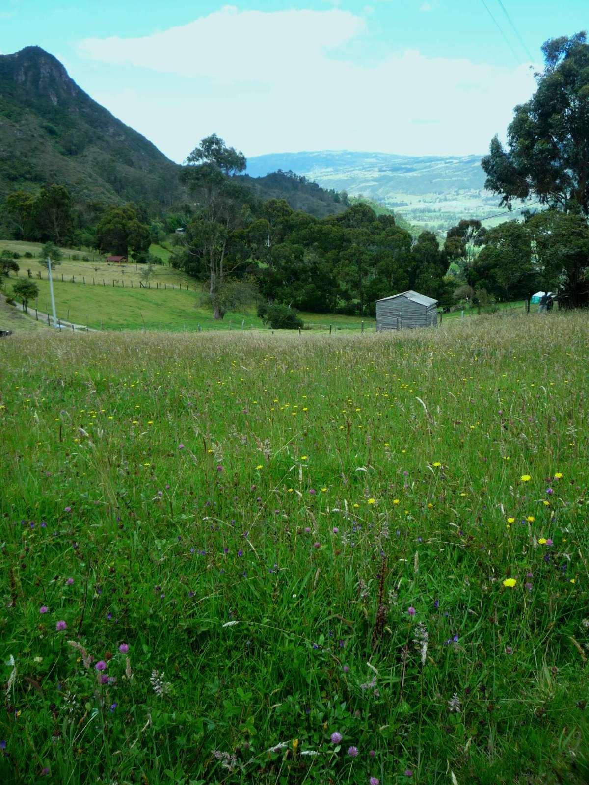 Alto del Pionono, Sopó Cundinamarca. 34y2q9k