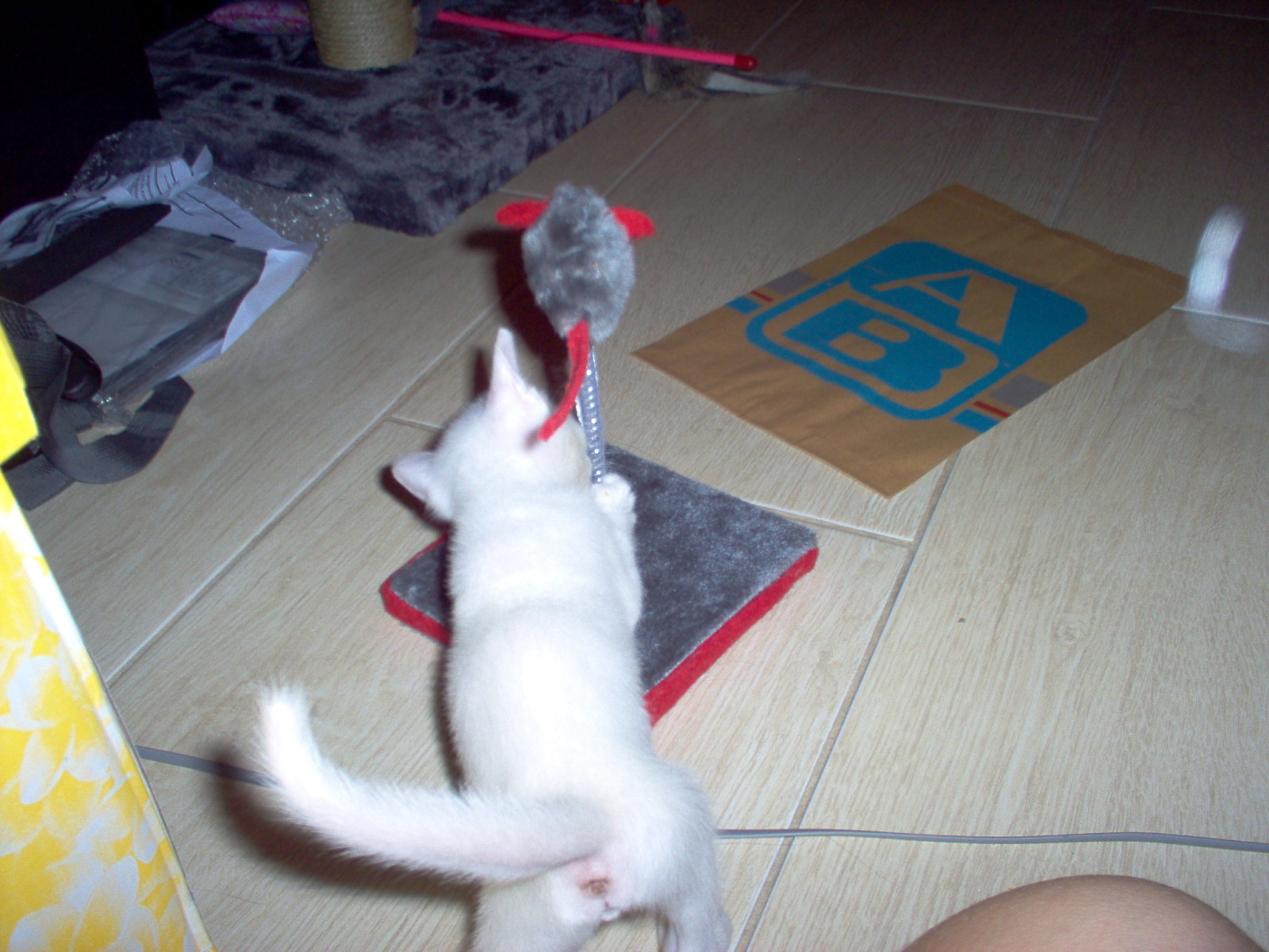 Βοηθεια, γατακι 1 ημερας - Σελίδα 14 6zrm8i