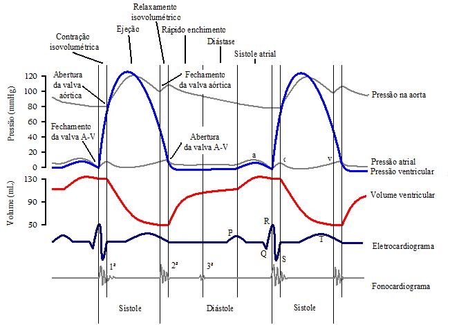 Ciclo cardíaco 97jfnm