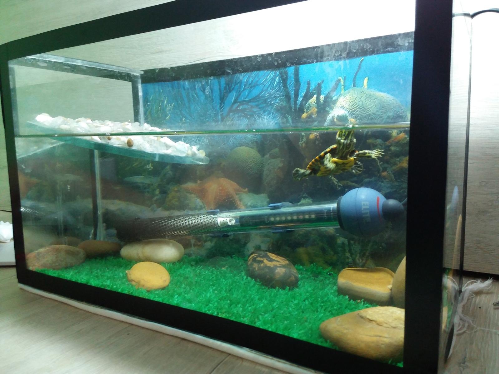 Aquaterrario Tartaruga baby O598qa