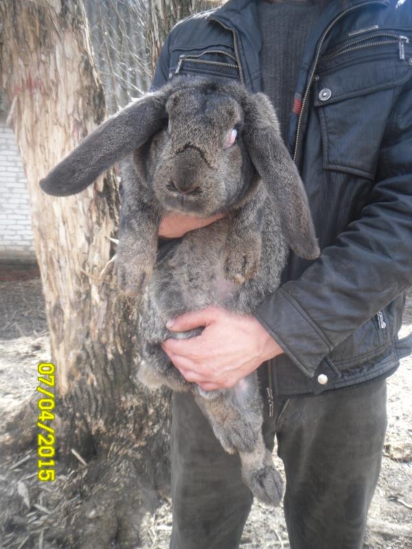 Кролики и магия O8uux2