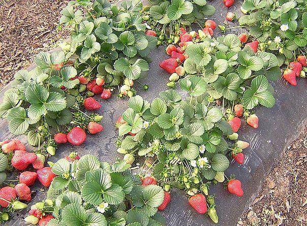 Садоводство и цветы - Страница 2 Rh341e
