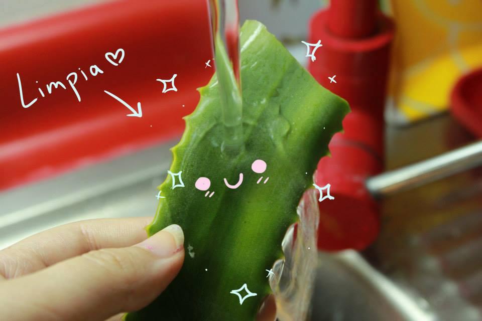 Aplicación de Aloe Vera en Peces S4wb4n