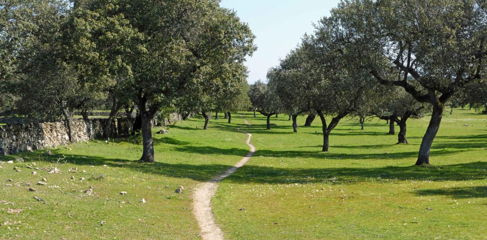 Vía de la Plata-Camino Sanabrés (Sevilla-Santiago). W9u3kl