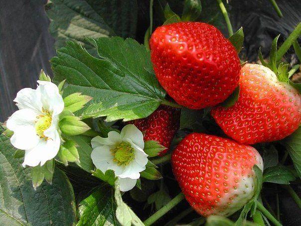 Садоводство и цветы - Страница 2 126bjf5