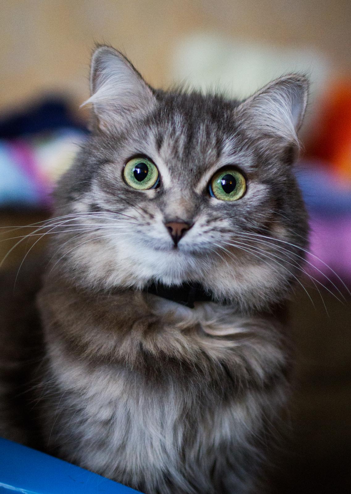 Наши любимые котярчики - Страница 10 20k98xs