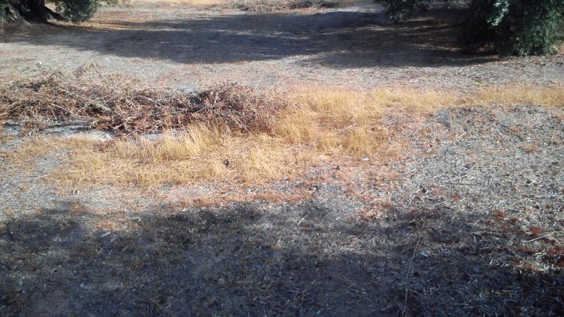 Manejo de suelos y uso de herbicidas 21l390m