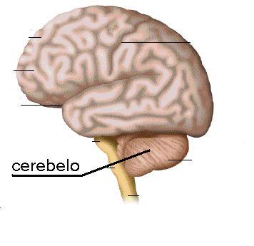 Restos de CERA (Vela/Velón), parte 2 2cx8gfn