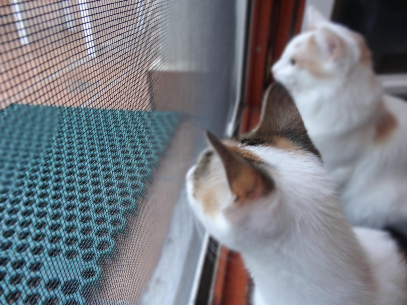redes - Mosquiteras y redes para las ventanas y cómo proteger a nuestros gatos - Página 10 2wm2a7l