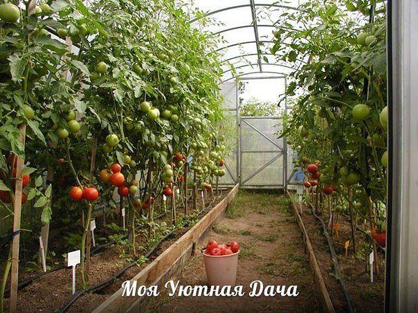 Садоводство и цветы - Страница 2 30didr6