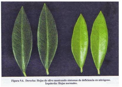 Fotos de carencias de nutrientes 33uy434