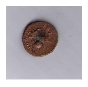 Semis de Colonia Rómula 343l077