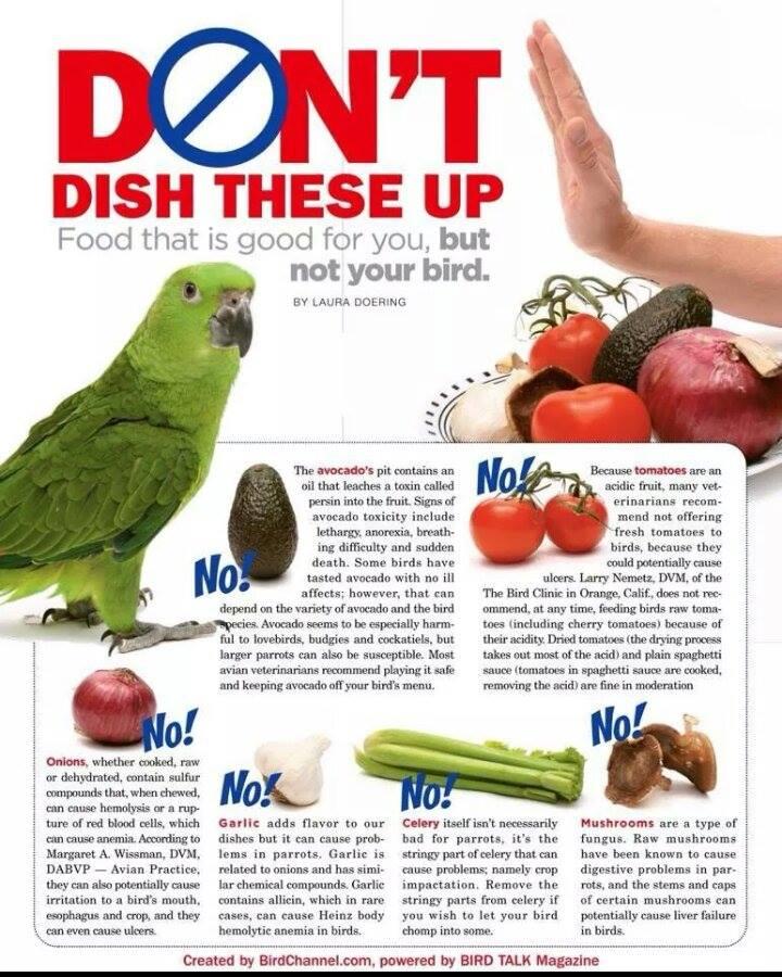 Millised toiduained on mürgised lindudele? 9uysk2