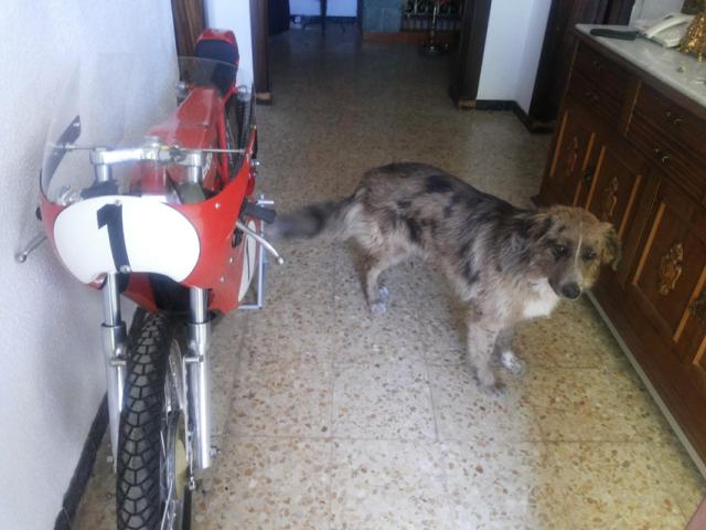 Proyecto moto competición de Josepe - Página 4 Dlkiyo