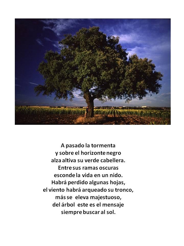 Convocatoria Día del Árbol  Fqq3d