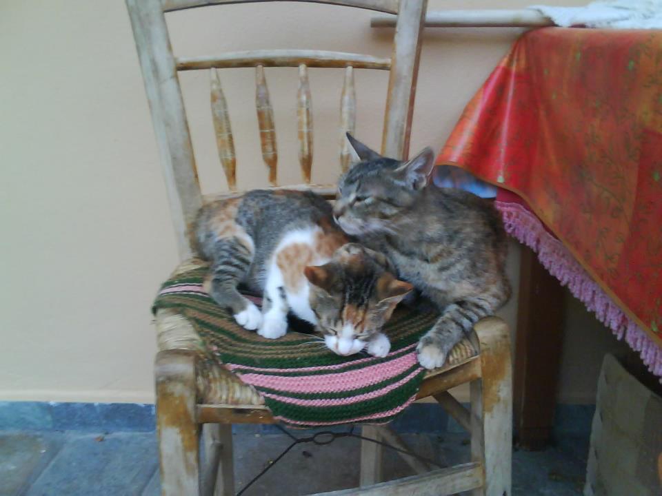 Χαριζονται 2 γατακια Θεσσαλονικη + προβλημα με 3ο γατακι Igybue